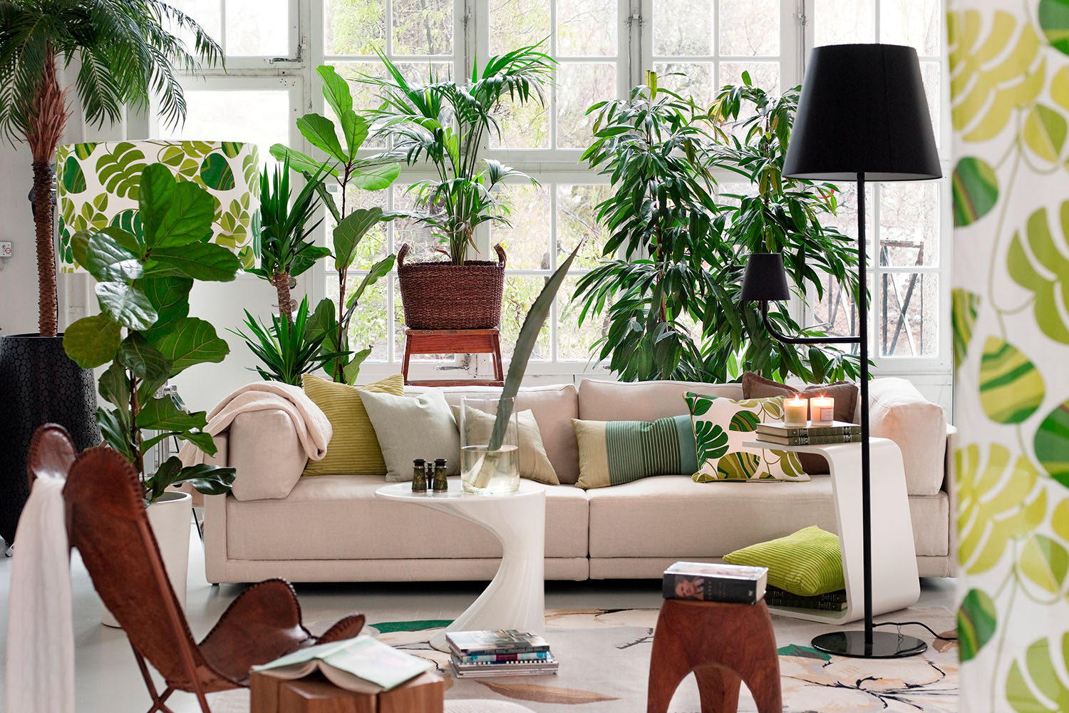 This Is How Many Plants You Need Per Room According To Science Better Homes And Gardens