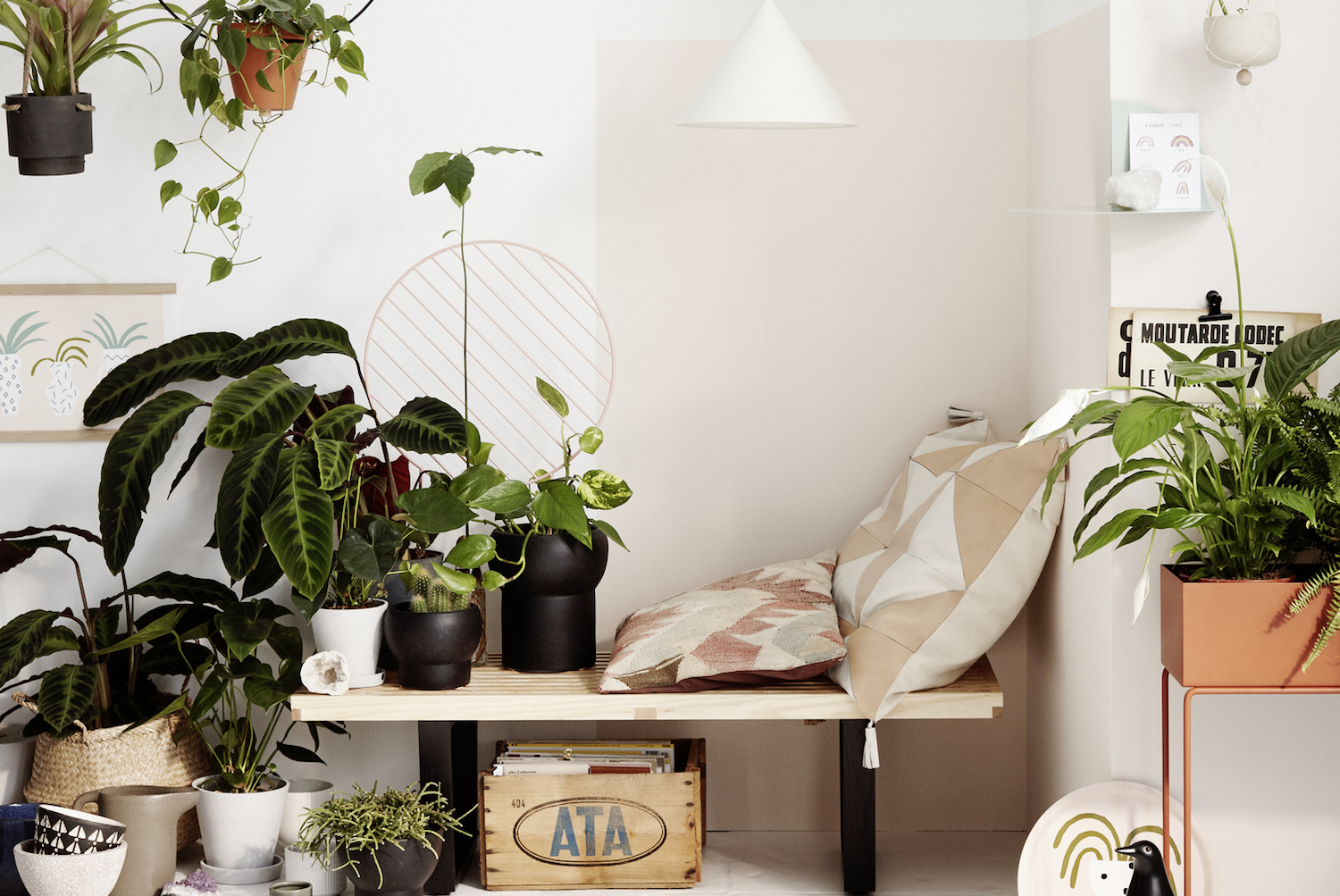 Indoor Plants 10 Best House Plants  Better Homes and Gardens