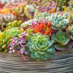 How To Grow Succulents A Beginner S Guide Better Homes And Gardens