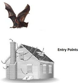 Bats and your home