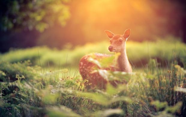 Cute Lips Wallpaper Cute Baby Deer Wallpapers