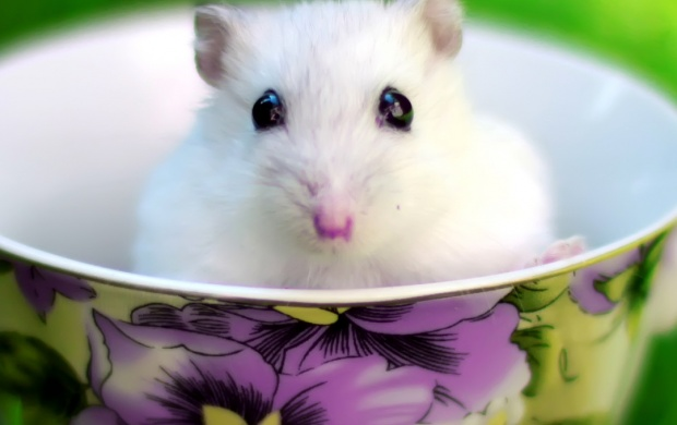 Cute Lips Hd Wallpapers Cute White Mouse In Cup Wallpapers