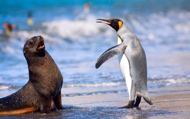 Cute Wallpaper Galaxy S4 King Penguin And Antarctic Seal Wallpapers