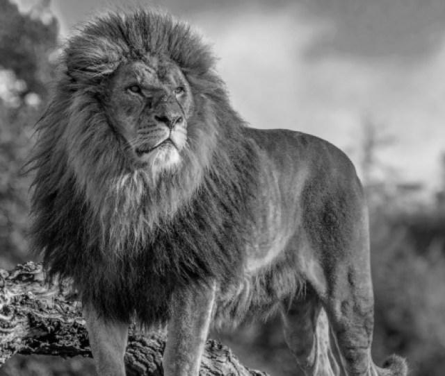 Views Lion King