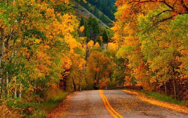 Galaxy S4 Fall Wallpaper Nature Autumn Forest Park Road Wallpapers