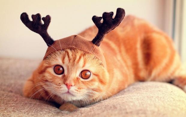 Galaxy Note 3 Hd Wallpaper Reindeer Cat Wallpapers
