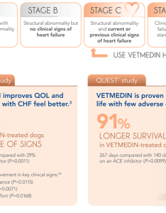 Both the quest and vetscope studies were completed using vetmedin capsules in us only chewable tablets are licensed also boehringer ingelheim vetmedica rh bi