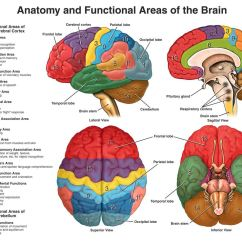 Left Side Brain Functions Diagram 7 Pin Wiring Trailer Australia Injury Facts