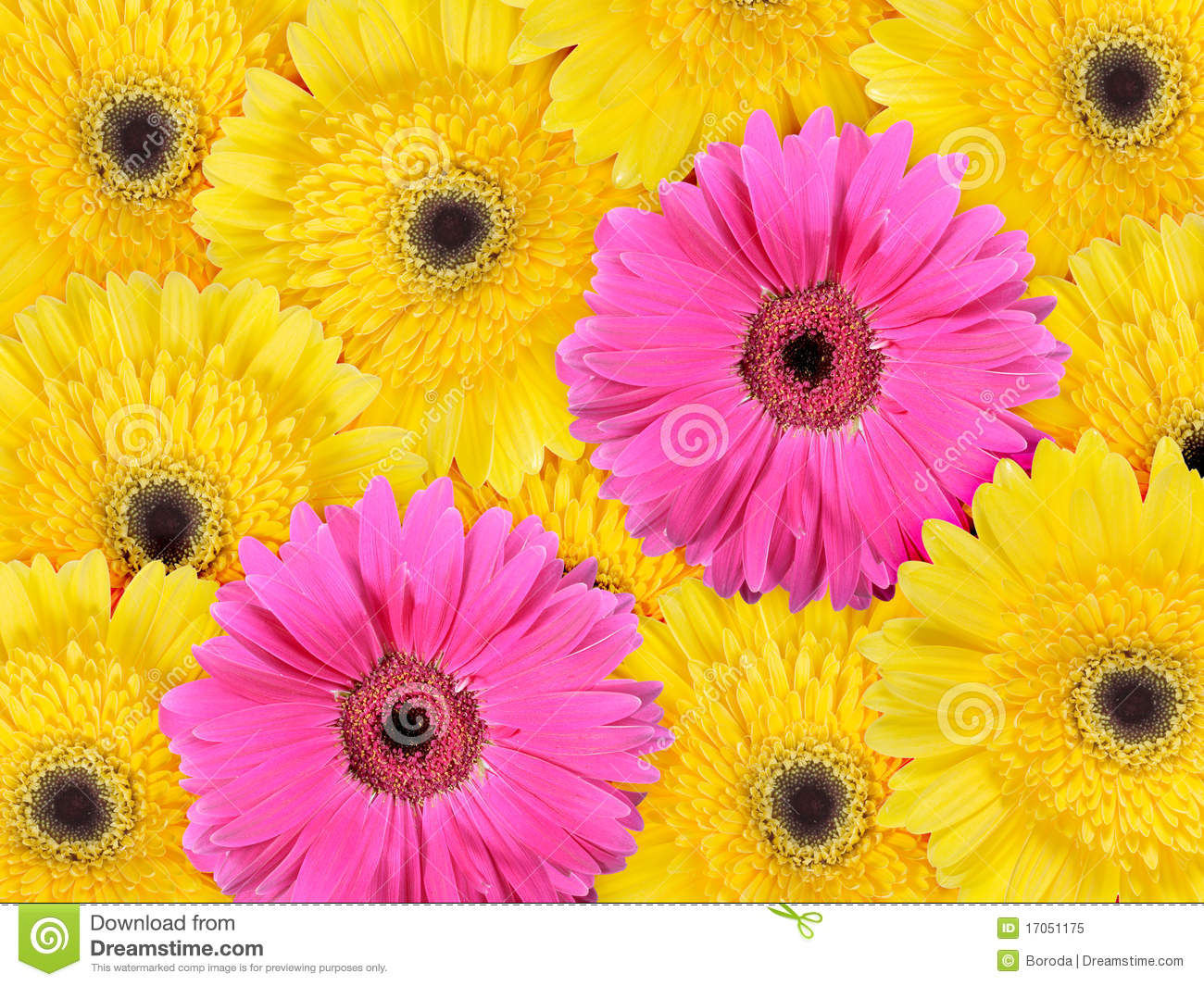 Yellow And Pink Flowers Background