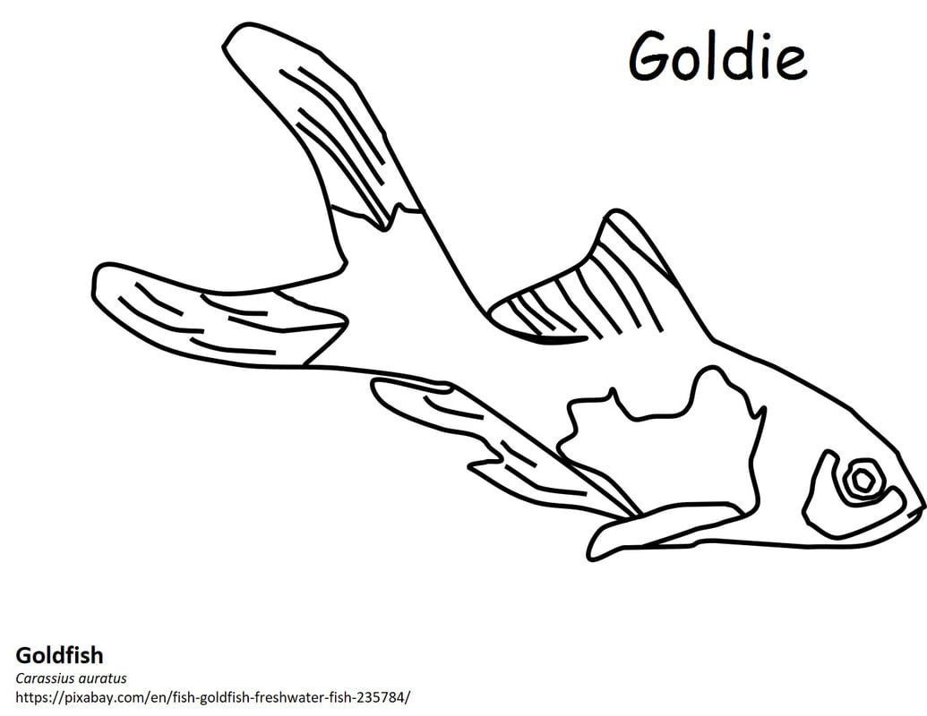 Invasive Species Coloring Book