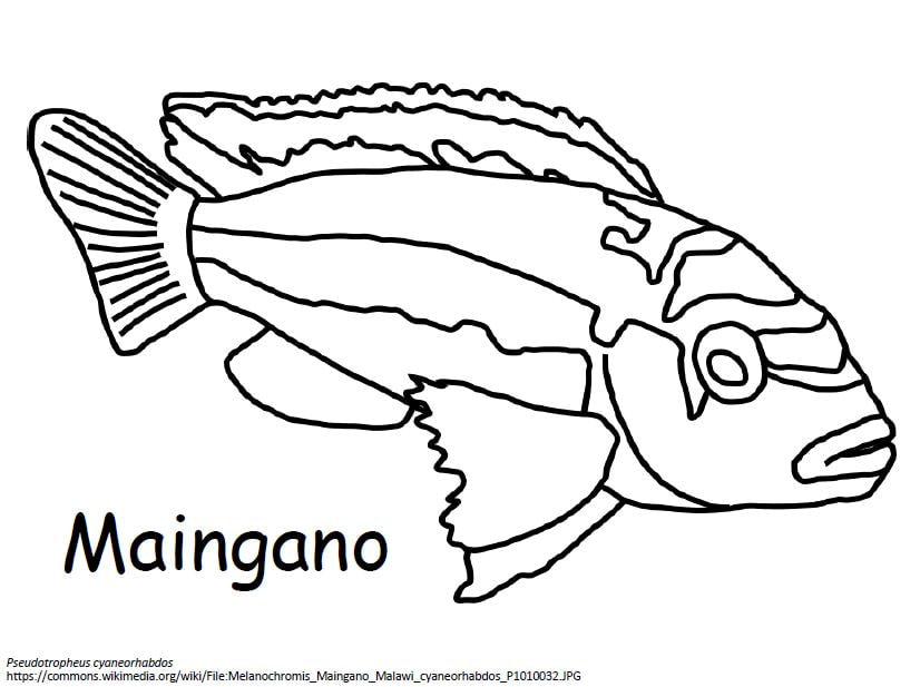 African Cichlid Coloring Book