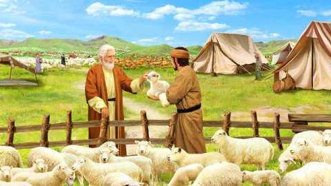giobbe,agnello,vita,cielo