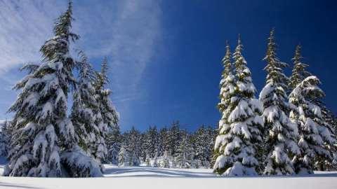 pino,neve,luce,sole,cielo