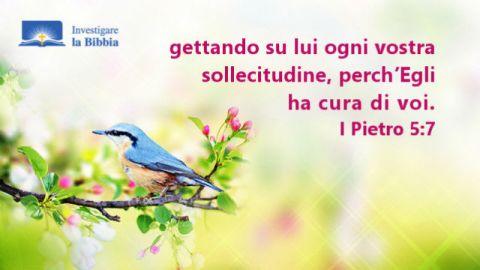 Dio ha creato tutto, uccelli e alberi