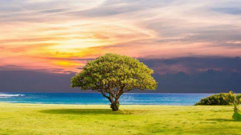 Un albero vicino al mare è fatto da Dio