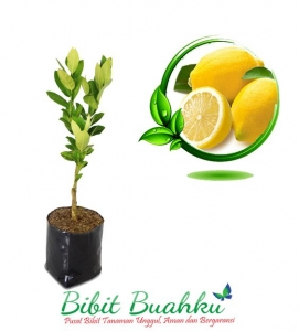 BIBIT JERUK LEMON