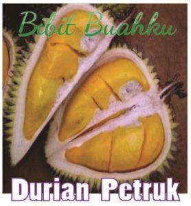 Bibit Tanaman Durian Petruk