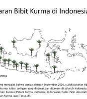 kurma indonesia