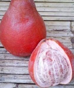 gambar buah pamelo merah