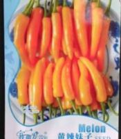 gambar benih cabai yellow papper