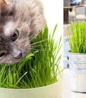 gambar cat grass
