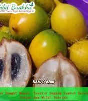 gambar buah sawo abiu manis