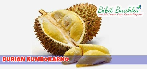 durian kumbokarno
