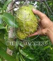 buah sirsak madu