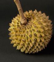 Buah Srikaya Durian Soncoya