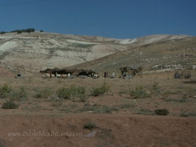 Picture of bedouin tents