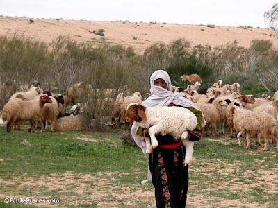 Shepherd with lamb in Negev riverbed