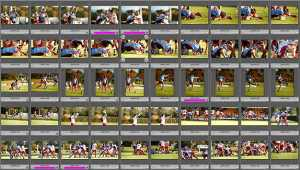 Culling Your Photos