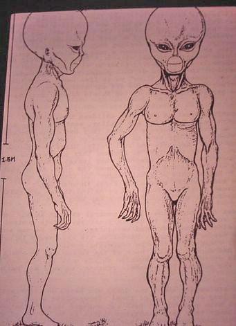 https://i0.wp.com/www.bibliotecapleyades.net/imagenes/montauk_alien_3.JPG