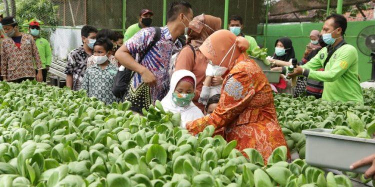 Wali Kota Risma saat panen raya hidroponik dengan anak-anak Surabaya/ist