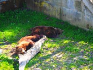 berne parc aux ours