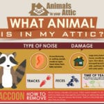 What Animals are in My Attic? An Identification Guide
