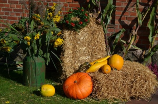fall backyard trends