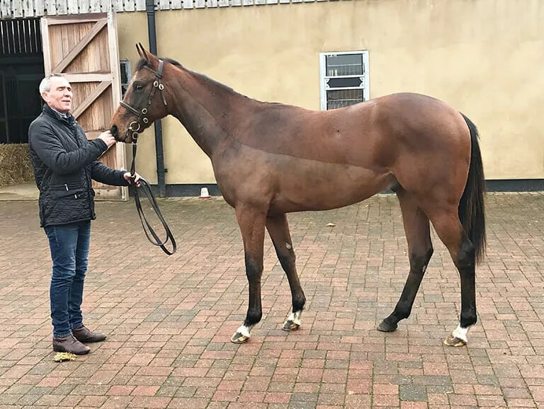 Acclamation X Bahati Colt, Trained by Andrew Balding - Biddestone Racehorse Syndicates Logo, Newmarket, Lambourne, Cheltenham, Marlbrough | Biddestone Racing
