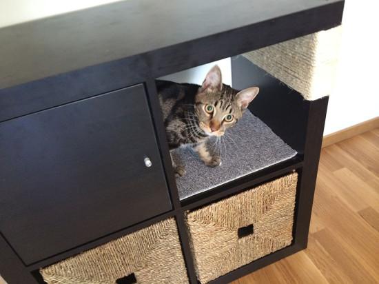 Une Bibliothque Kallax Pour Votre Chat Bidouilles IKEA
