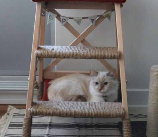 Pour le bonheur de votre chat  arbre  chat avec hamac