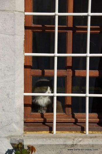 Le chat se demande pourquoi il y a tous ces enfants ce matin
