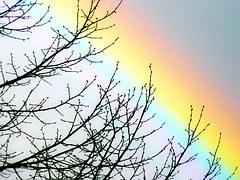rainbow-1201862__180