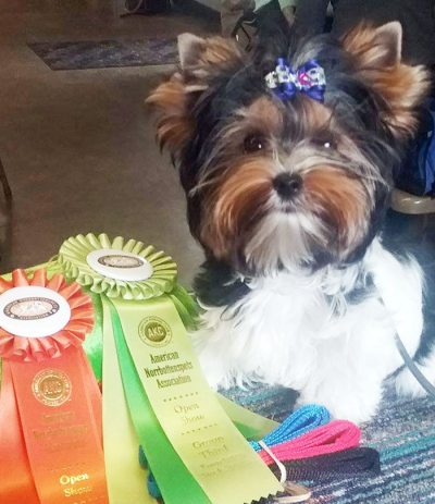Rocky Mountain's Sir Casper won BOB