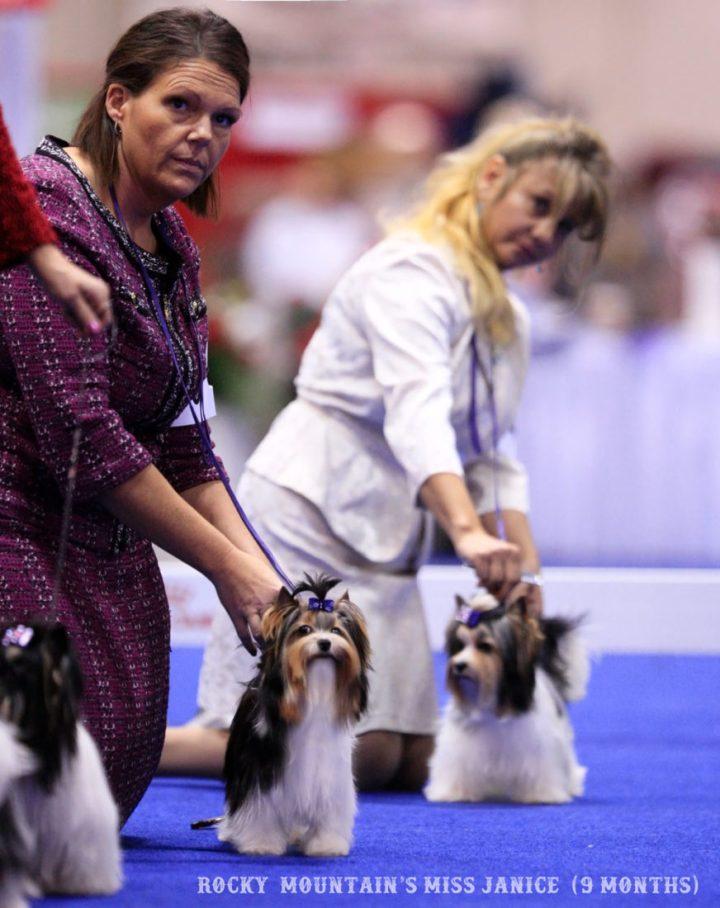 Rocky Mountain Biewer Terriers Orlando 2017 AKC National Championship