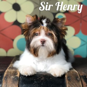 Henry Biewer Puppy