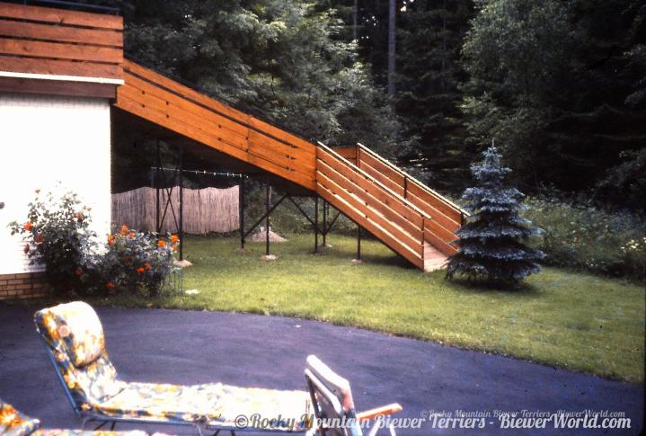 The famous Yorkie Ramp at the new house in Hirschf