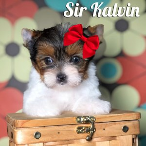 Rocky Mountain's Sir Kalvin