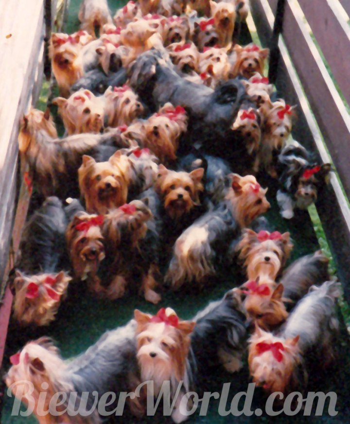 The Yorkie ramp and the Friedheck Kennel in Hirschfeld