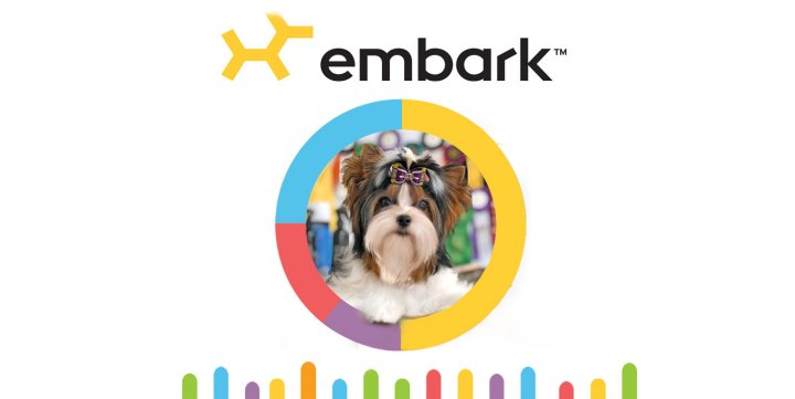 Biewer Terrier Embark Health Test