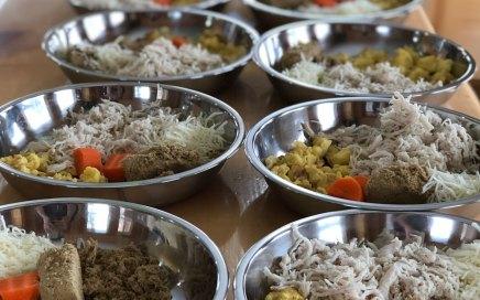 Home made Biewer Terrier Food